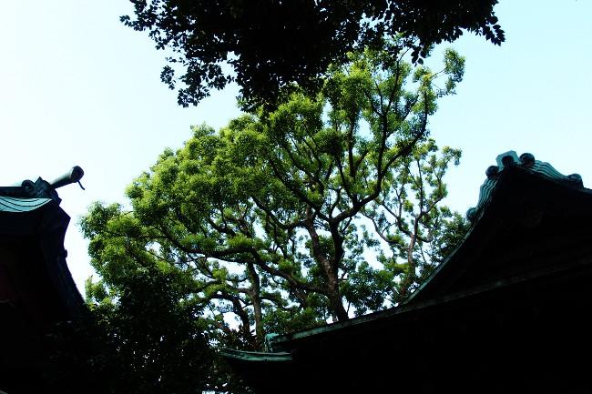 A 品川神社 37.JPG