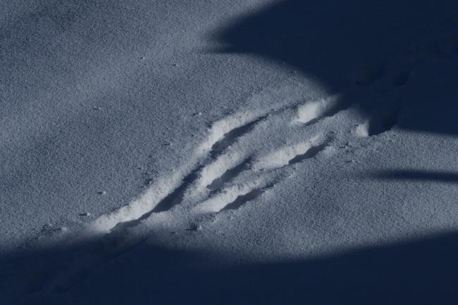 AA冬景07.JPG