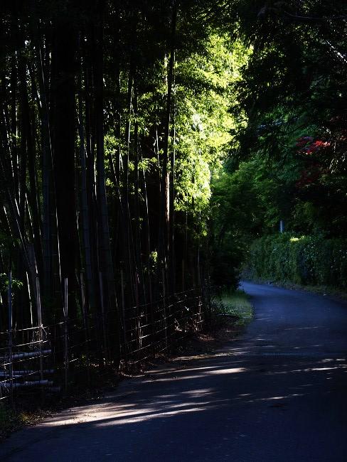 A散歩112.JPG