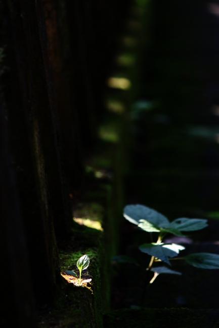 A春日山神社21.JPG