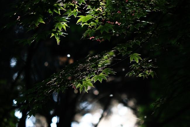 C 春日山神社 07.JPG