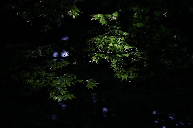 C 春日山神社 08.JPG