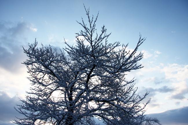 公園雪景03.JPG