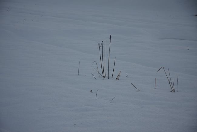 春雪09.jpg