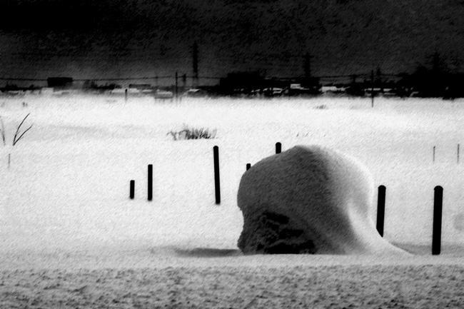 雪原101B.jpg