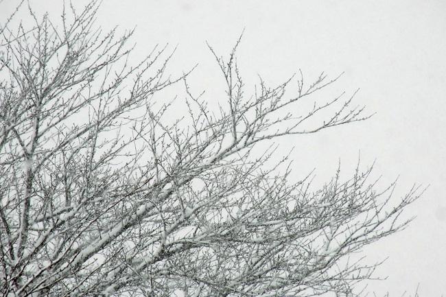 雪景03.jpg